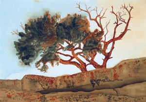 North Rim Tree