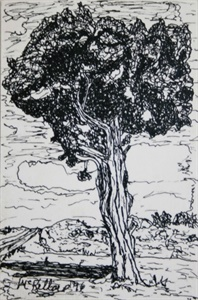 That Tree - Juniper Between Fredonia and the Kaibab
