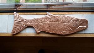 Male Coho Salmon