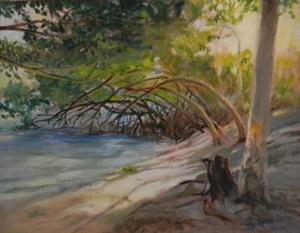 Mangroves in the Morning