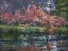 63-19  River Redbuds 63