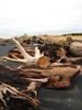 driftwood again