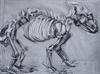 baby carnivore, 2001