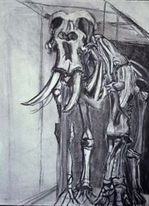 elephant, 2001