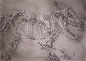 mammal skeletons