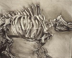 rhino, 2000