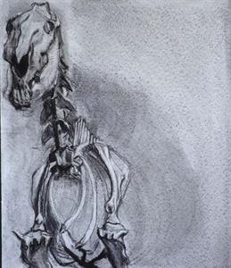zebra,2002