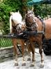 Austrian Ponies