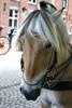 Brugge Pony