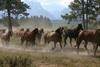 Return to Pasture in Jackson