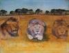 Serengheti Lion