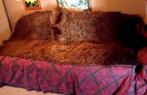 Bison Robe (one half)