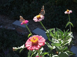 Two Butterfly's and a Bee""