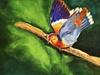 Colorful Dove
