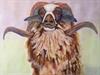 New Zealand Black-Faced Ram